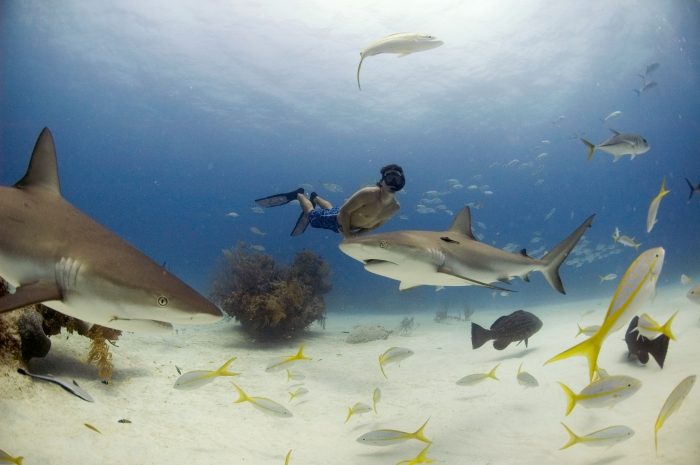 Rob Stewart - Sharkwater